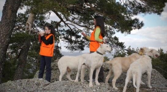 Carta a los rehaleros: No, no hay que responder las solicitudes de información de Galgos del Sur