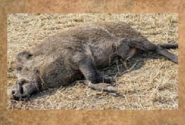 Frankfurt prohíbe la caza y la agricultura por la PPA