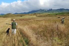 El Gobierno riojano propone la caza nocturna del conejo para minimizar los daños en cultivos