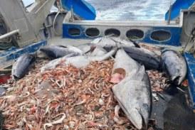 Baleares, cementerio abisal de los atunes rojos