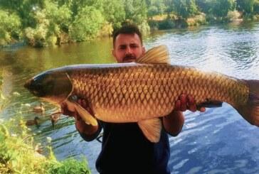 ¿Qué hace esta enorme carpa asiática en Madrid? Las especies exóticas nos invaden