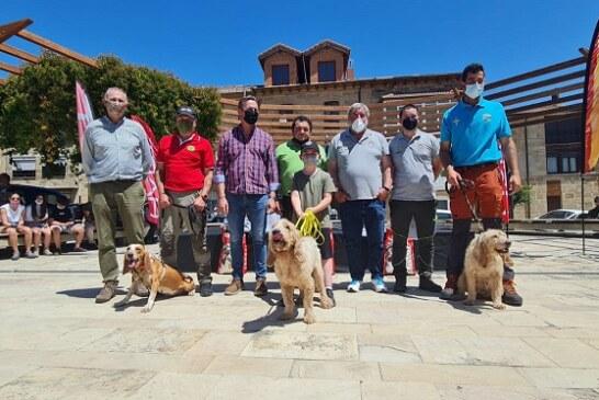 El cántabro Adolfo Posada y 'Gaby' se imponen en el XXVIII Campeonato de España de Perros de Rastro modalidad Jabalí