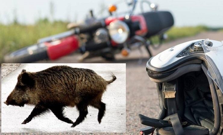 El motorista herido al chocar con un animal en Valle de la Serena sigue muy grave en la UCI