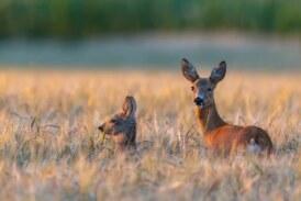 La caza en los parques nacionales: ¿una potencial fuente de ingresos para mejorar su sostenibilidad?