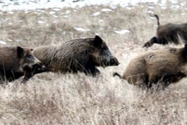 El mejor control de la población de animales silvestres es la caza