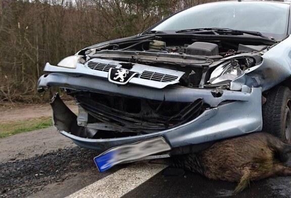 La caza es una actividad indispensable para reducir los accidentes de tráfico