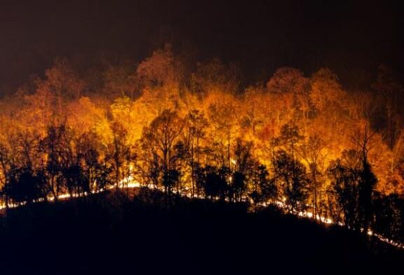 El papel del cazador en los incendios
