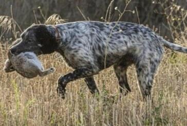 Andalucía. El sector cinegético se rebela contra la Ley de Bienestar Animal, que tachan de «letal»