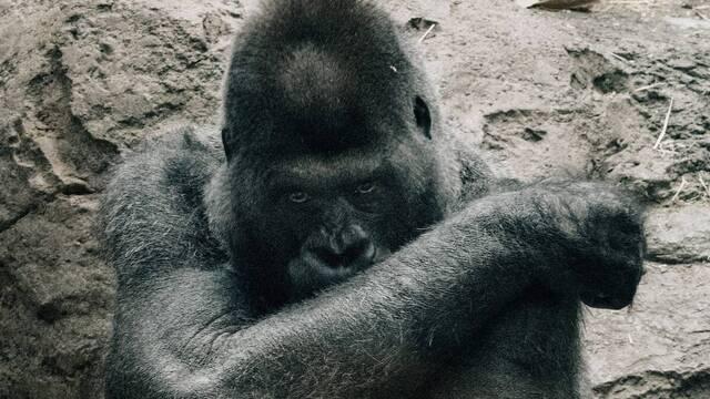 El peligro del animalismo y el veganismo: buscan «acabar con la propia naturaleza del hombre»