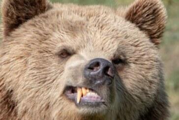 Un excursionista de 42 años fallece al ser devorado por un oso en el Parque Nacional de Egarki de Rusia