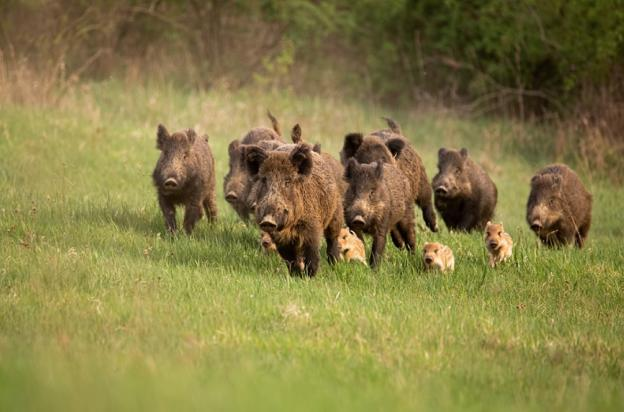 El 70% de los extremeños considera que la caza es necesaria y que contribuye a la economía de las zonas rurales