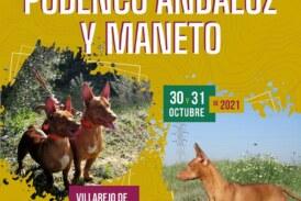 Villarejo de Salvanés acogerá el 31 de octubre el VII Campeonato de España de Podenco Andaluz y Maneto