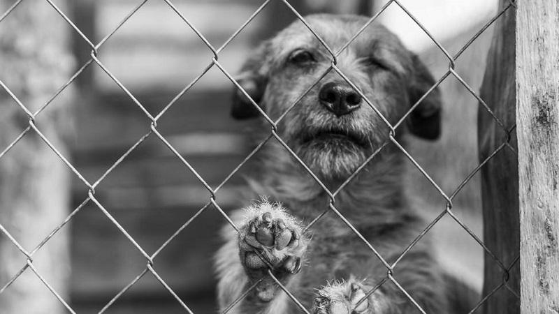 El Gobierno obligará a los dueños de perros a hacer un cursillo y a no dejarlos solos más de un día