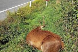 Preocupación de los cazadores por los accidentes con fauna en las carreteras navarras